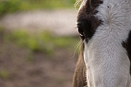 Foal close-up