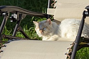 Cat Snoozing on Sun Lounger