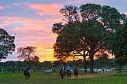 Landscape Sunset with Horses