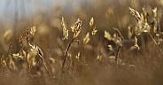 Clifftop Grass