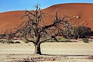 Namib-nuakluft National Park - Namibia