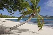 Tropical beach and leaning palm tree - Fiji