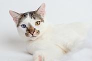 Cute cat portriat