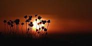 Macro sunset