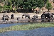 African Elephants scene