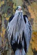 Heron in the wild