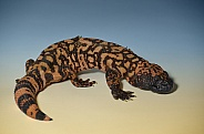 Gila Monster or Beaded Lizard
