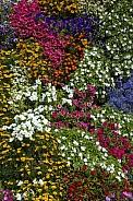 Floral display - Ripon - UK