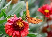 Orange butterfly on a bright colored flower