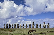 Wild Horses - Easter Island