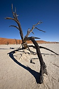 Dead Vlei - Sossusvlei - Namibia
