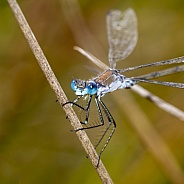 Close up of damselfly sitting on stem