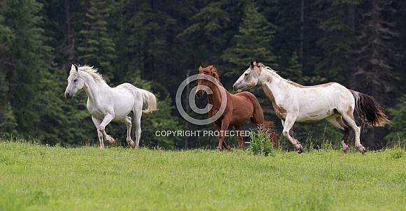 3 Horses Running