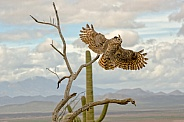 Owl - Great-horned Owl in the Wind