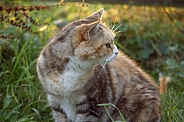 Cat in the evening sun