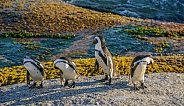 African Penquin Morning Inspection