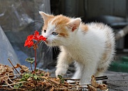 Kitten and the Flower