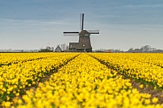 Yellow flowers and a windmill