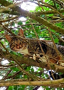 cat up a tree