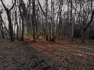 Cold Dark Woods
