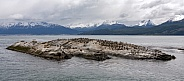 Colony of Cormorants - Beagle Channel - Argentina