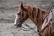 Horse in Braids