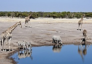 Wildlife at a busy waterhole - Namibia