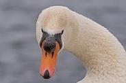 Nodule Swan