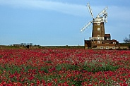 Poppy field - Norfolk coast - England