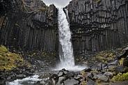 Basalt columns - Svartifoss Waterfall - Iceland
