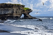 Natural Arch and Waved Albatross