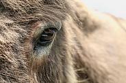 The donkey's eye