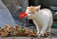 Kitti and the Flower