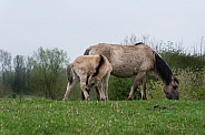 Mother with young foal