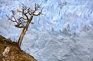Grey Glacier - Torres del Paine - Chile