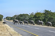 African Elephants crossing a road - Zimbabwe