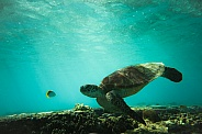 Sea Turtle and Friend