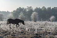 Horse in snow landscape