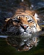indrah swimming