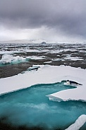 Hooded Seals on a landscape of sea ice - Greenland