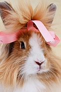 Pet Rabbit With Pink Ribbon