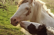 Pony and Foal