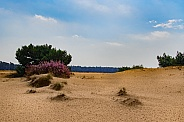 Sand drift in the Netherlands