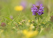Common Self-Heal (Heal-All)