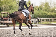 Cantering Mare