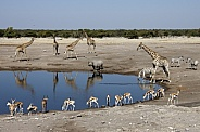African wildlife at a waterhole - Namibia