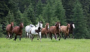 A Group of Horses Running