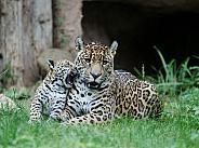 Jaguar and Jaguar cub