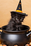 Cute kittens for Halloween