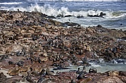 Seal Colony - Skeleton Coast - Namibia